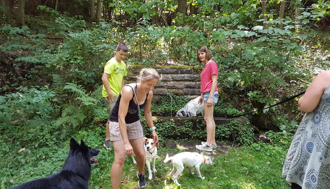 Treffen der Schlittenhundesport-Liebhaber